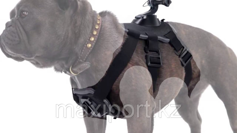 Крепление gopro на собаку, фото 2