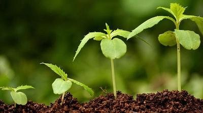 Регулятор роста