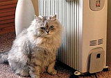 Сделай эту осень теплой и уютной с масляным обогревателем