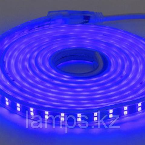 Светодиодная лента пылевлагозащищенная COLORADO 50M синий