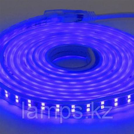 Светодиодная лента пылевлагозащищенная COLORADO 50M синий, фото 2