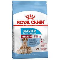 Royal Canin MEDIUM STARTER M&B 16 kg Корм для беременных и кормящих собак средних пород