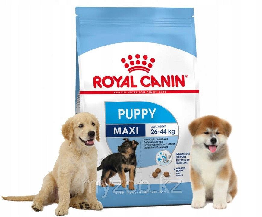 Корм для щенков крупных пород Royal Canin MAXI PUPPY 15 kg.