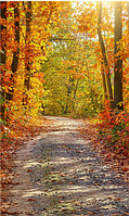 Фото фоны вертикальные, Виниловые, 200х300см. Осень
