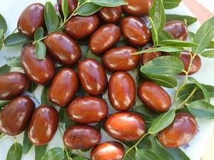 Плоды китайского финика Унаби