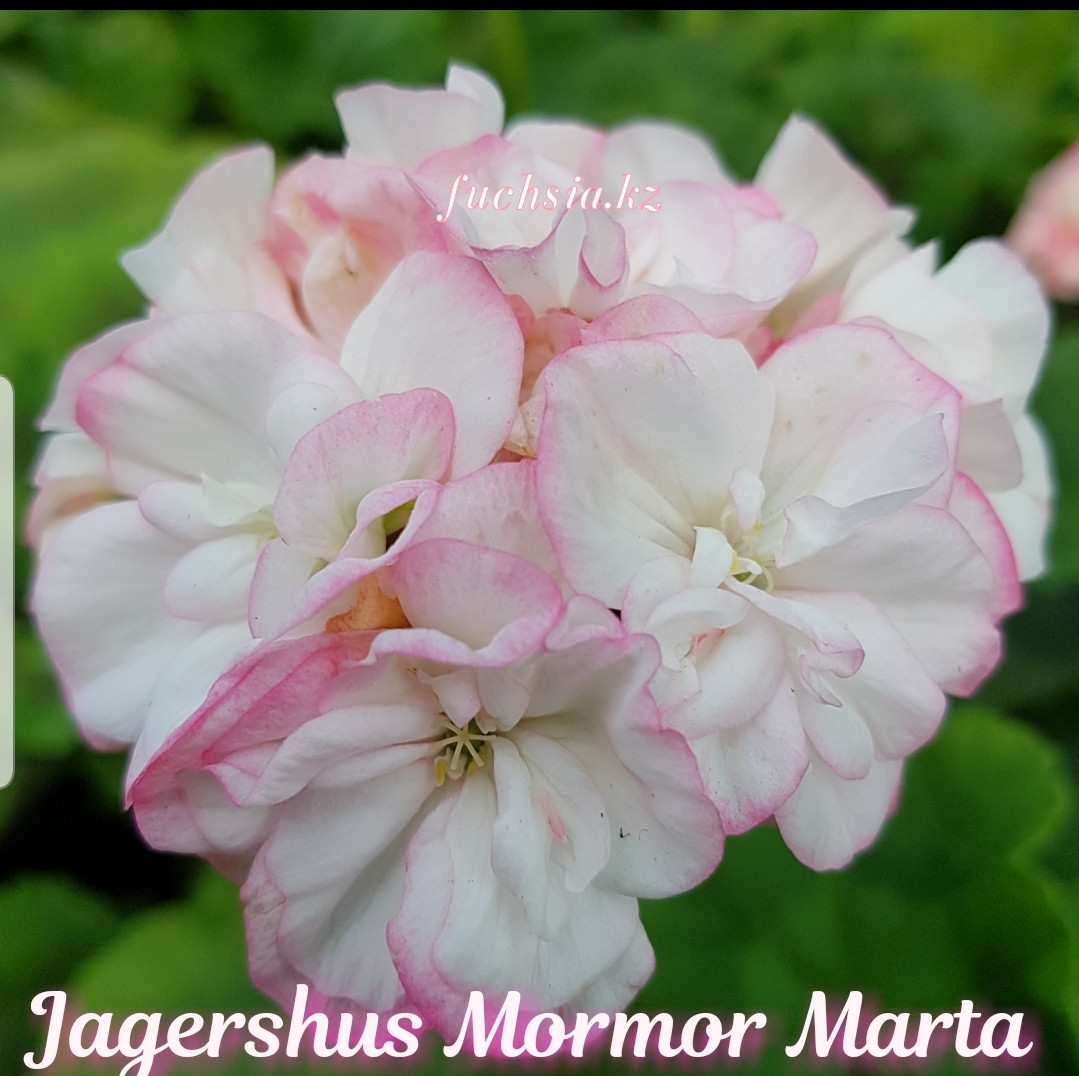 Jagershus Mormor Marta