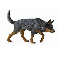 Австралийская пастушья собака, L