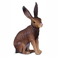 Заяц-русак, S