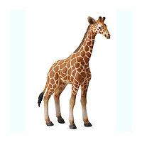 Жеребенок сетчатого жирафа, L