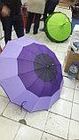 Зонты трехцветный, фото 2