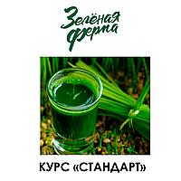 """ВИТГРАСС - Курс """"СТАНДАРТ"""""""