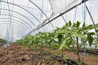 Парниковая пленка ПВД для сельского хозяйства - фото 2