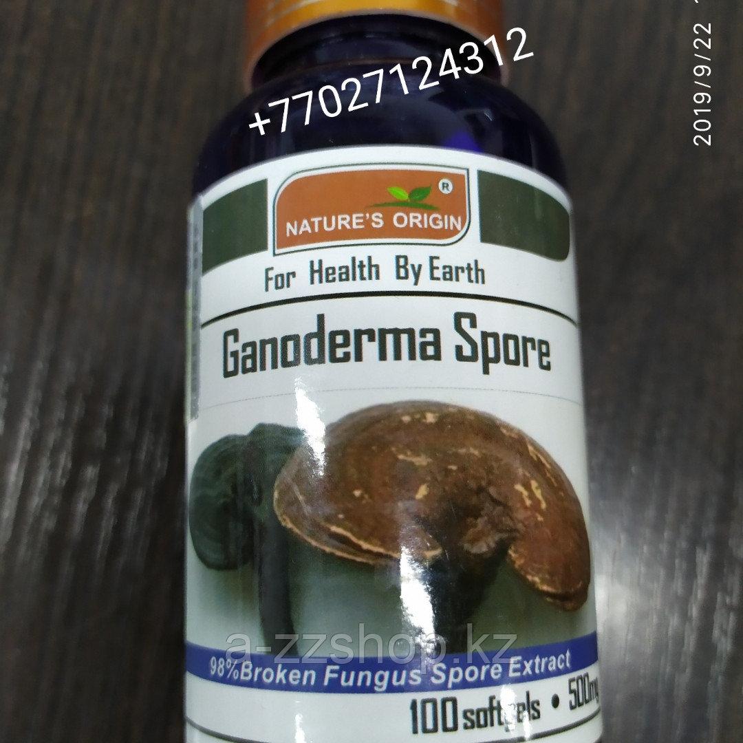 Капсулы Ганодерма - Ganoderma Spore
