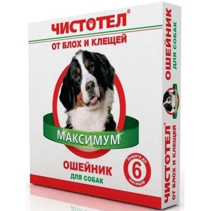 Чистотел ошейник Максимум для собак, фото 2