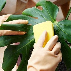 уход за комнатными растениями, общее