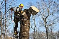Снос деревьев