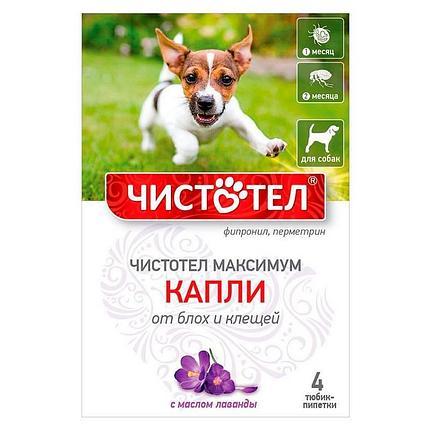 Капли Чистотел Максимум от блох и клещей для собак, фото 2