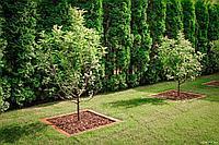 Компенсационные посадки деревьев и кустарников