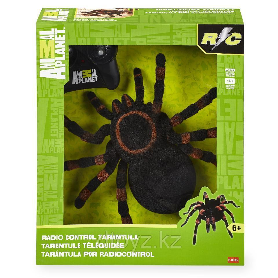 Гигантский паук Тарантул Animal Planet