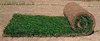 Элитные сорта семян газона