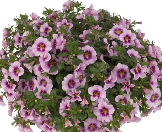 Bloomtastic Rose Quartz №402