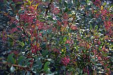 Чарынский национальный парк - тур в автодоме, фото 2
