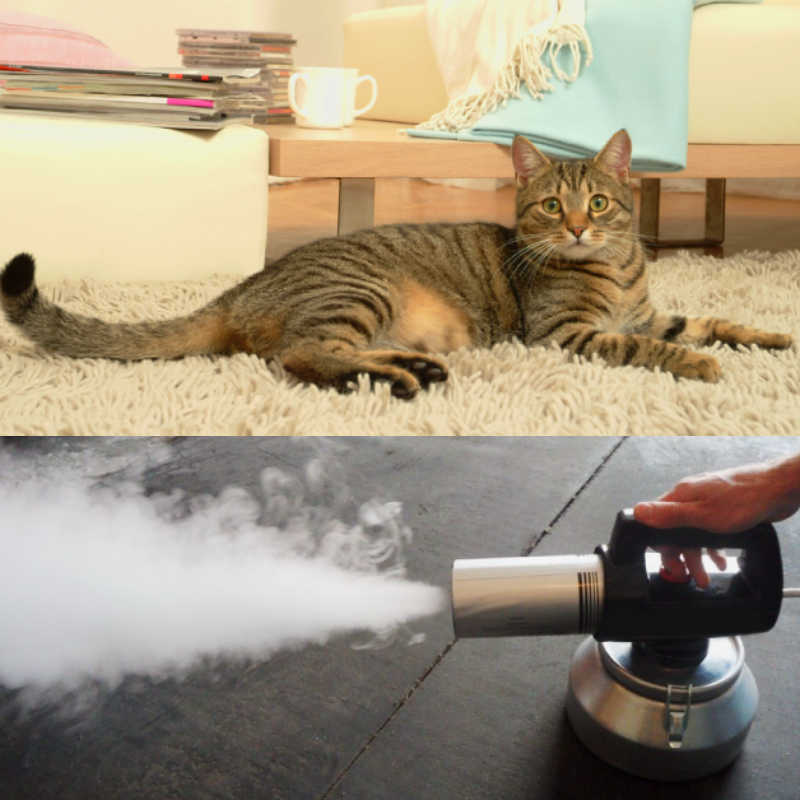 Удаление кошачьего запаха