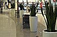 Озеленение торговых центров, фото 3