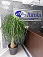 Озеленение офисов, фото 10
