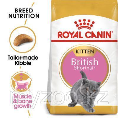 Корм для британского котенка Royal Canin BRITISH SHORTHAIR KITTEN 2 kg