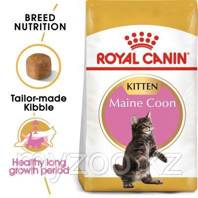 Корм для котят породы мейн кун Royal Canin MAINE COON KITTEN 4kg