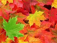 Осенние листья для декора