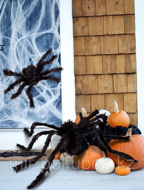 Большой  мохнатый черный паук (декорации для Хэллоуина, 70 см