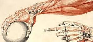 Комплекс для профилактики остеопороза. Крепкие кости.