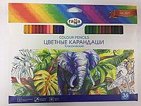 Карандаши цветные Гамма 36цв.