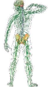 Стальные нервы. Комплекс для обретения стрессоустойчивости.