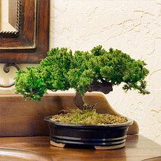 Деревья искусственные, бонсаи искусственные