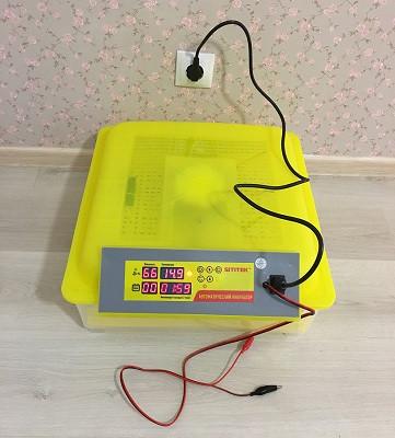 Яйца хорошо видны сквозь верхнюю крышку инкубатора  (нажмите на фото для увеличения)