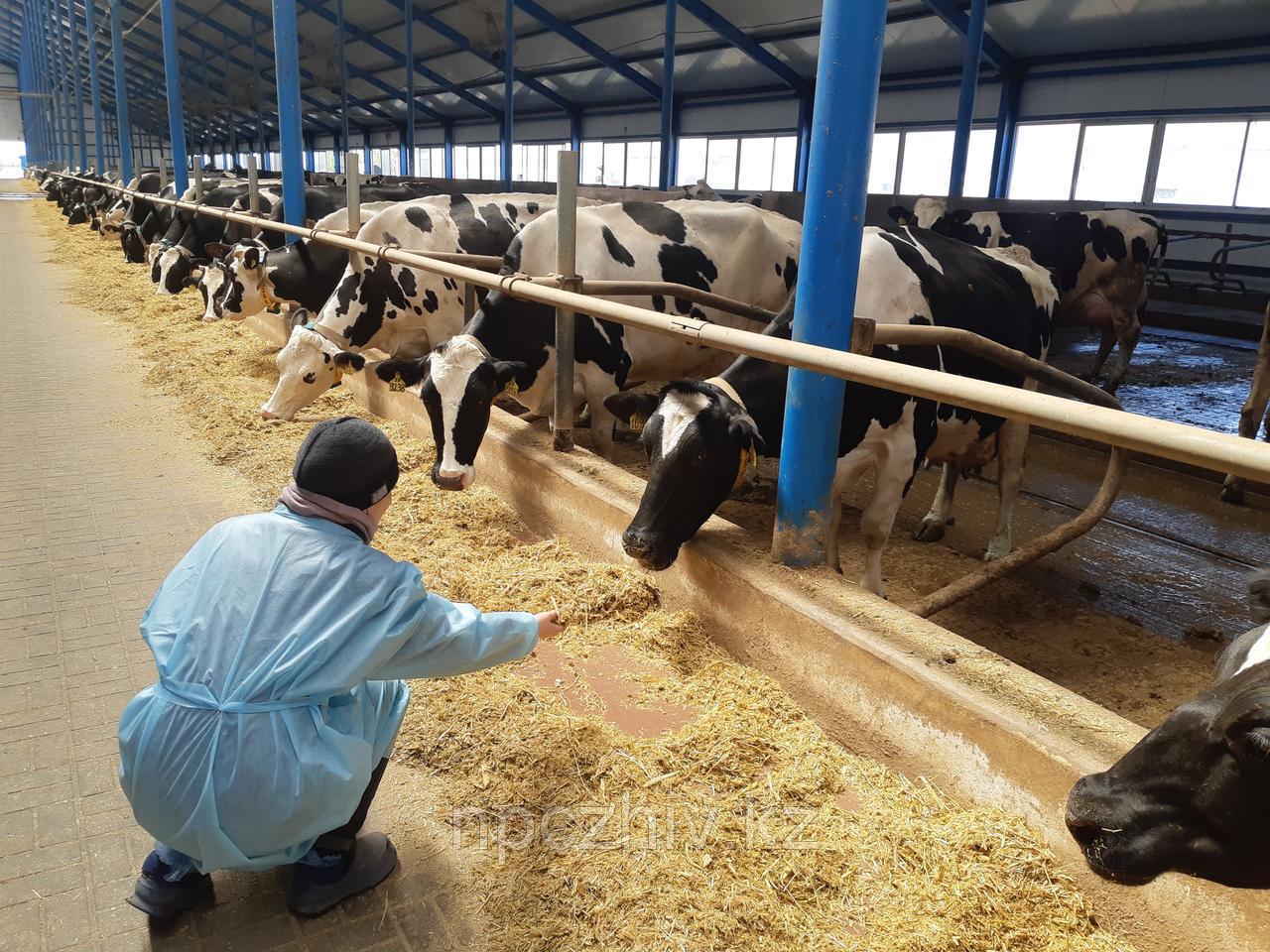 Услуги разработки программ селекции стад в молочном скотоводстве