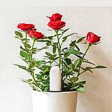 Датчик влажности, освещения и уровня удобрений Xiaomi Mi Flower monitor, Беспроводной. Для растений. Арт.4781, фото 2