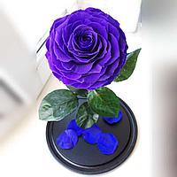 Роза фиолетовая Кинг сайз 33 см