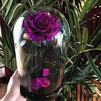 Роза ярко-фиолетовая Кинг сайз 33 см