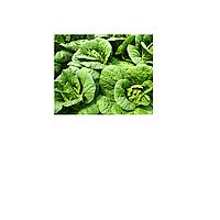Семена растений с оздоровительными свойствами