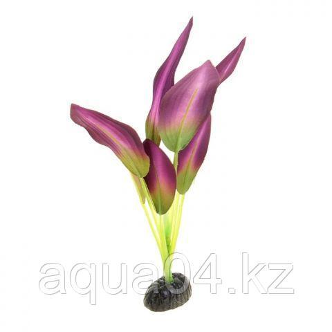 Шелковое растение Эхинодорус зелено-фиолетовый 50 см