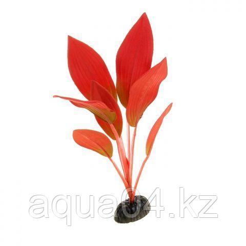 Шелковое растение Эхинодорус Амазонка красный 50 см