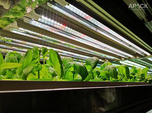 LED лампы для растений, фото 2