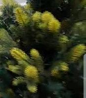 Искусственная елка Альтаир высота 240 см, фото 3