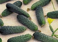 Семена огурца Меренга F1 / семена 1000 шт