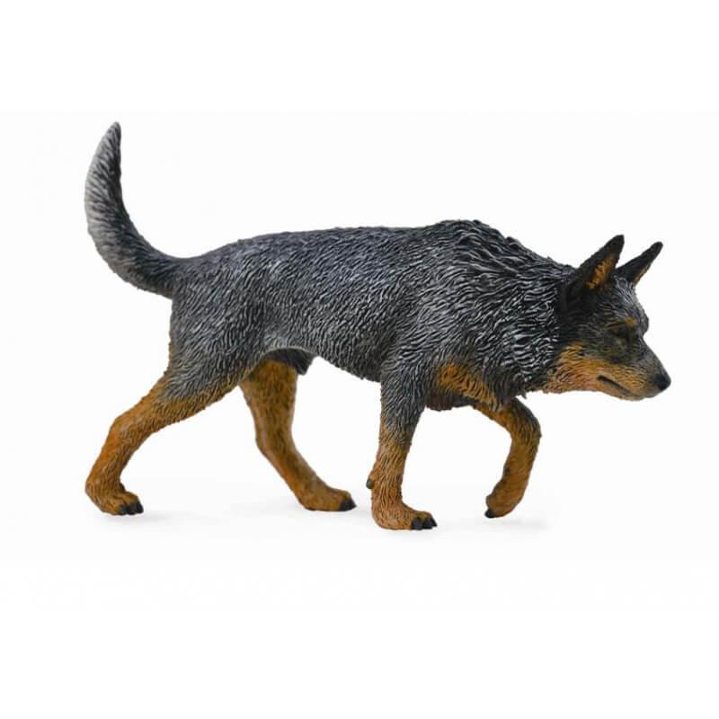 Австралийская пастушья собака, L Collecta