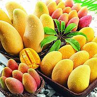 Сухофрукты Манго сушеный, Dried Mango BENEFRUIT на развес
